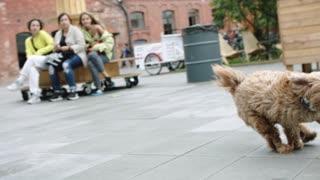 Dog Running !!