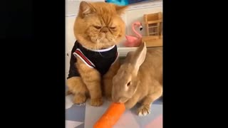 Funny Pets video Try Not To Laugh