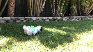 Easter Egg Hunting with the cutest puppy ever