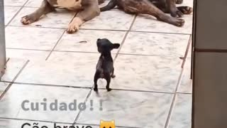 3 dogs fighting