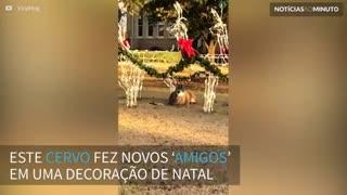 Cervo se 'camufla' em decoração de natal