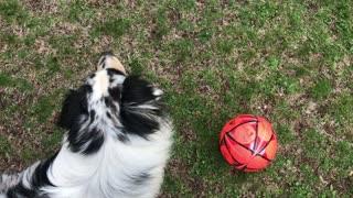 Go get the soccer ball