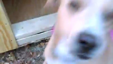 Elsa and her custom dog house