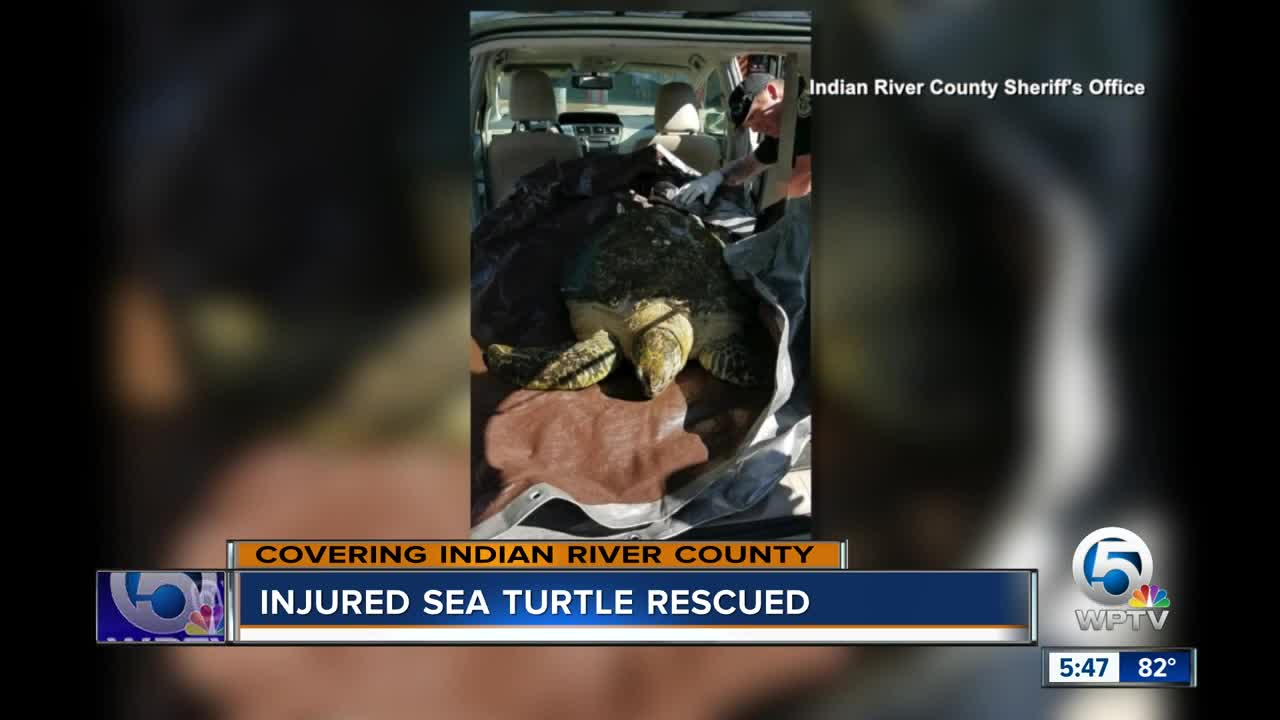 Injured sea turtle rescued in Indian River County