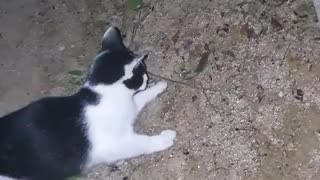 It's a cat that plays with mice. Surprising.