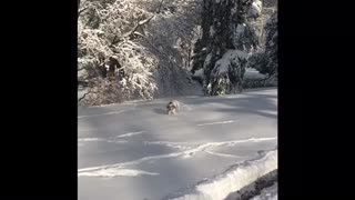 Playful puppy runs in the snow for the first time.