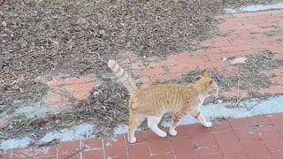 cute wild cat looking around