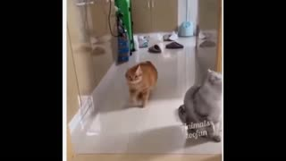 A big cat walks and waddles