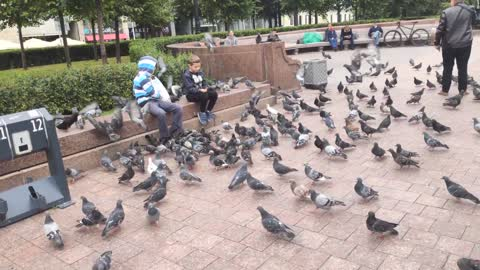 two children feed many pigeons