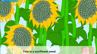 How do seeds travel Video Lesson