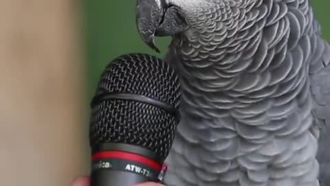 The most genius parrot in the world