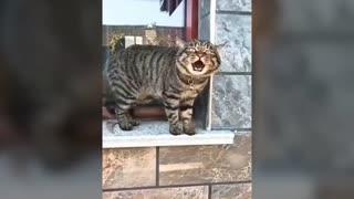 Amazing talking cats