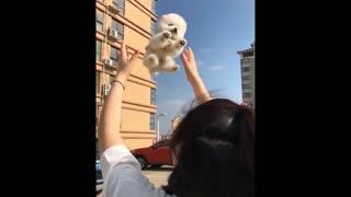 💗😍 Funny and Cute Pomeranian #10 😍 Perritos bebes lindos 🐱💗