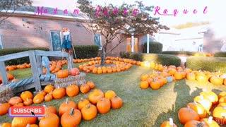 The Beautiful color of Pumpkins