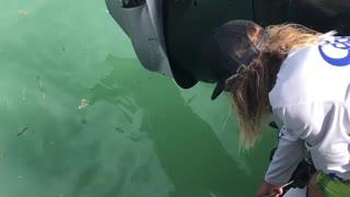 Feeding a Wild Shark