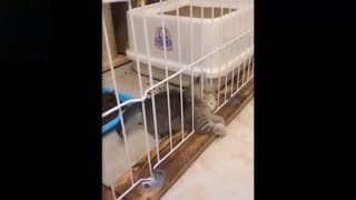 Cute And Funny Pets Compilation %