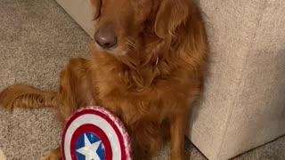 Dog america