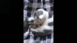 Funniest and cute animals
