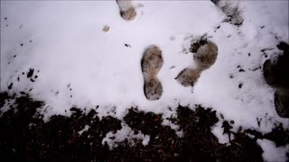 Family of Sasquatch Leave Trail After Fresh Snowfall