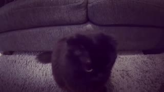 Cute Cat Playing with Camera