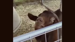 Cute and funniest animals - 2021
