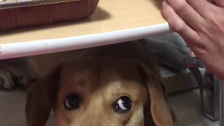 The puppy that wants to eat food!