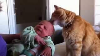 Cats Are Meeting Babies for the very First Time