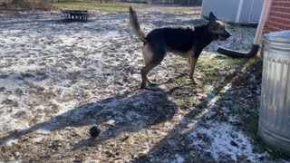 Plays the Fetch