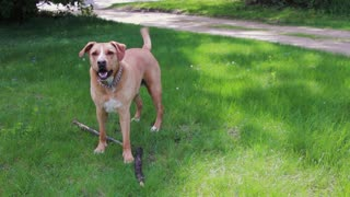Wonderful dog Cool and intelligent dog