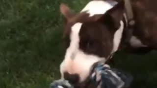 Bull Training