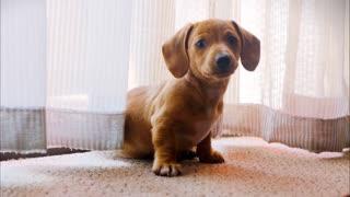 Cute little cute puppy