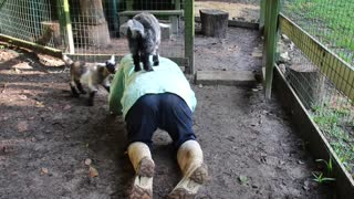 Goat Yoga with Tyrone and Tonto
