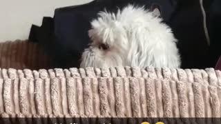 My dog hates me!