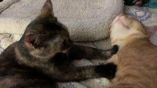 Ultimate kitty massage!