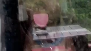 Dog Tries to Lick His Way Through Window
