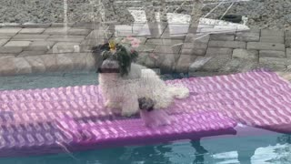 Cute puppy loves spending time on the float
