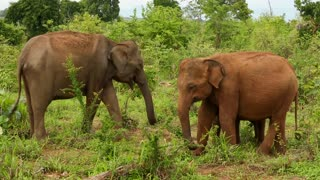 A group of elephants eat in the woods