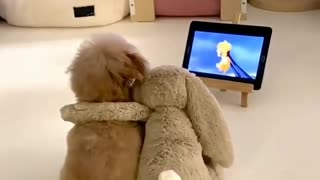 Molly enjoying movie time on a tablet
