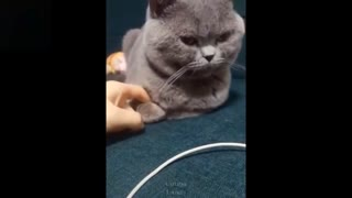 More funny Family pets