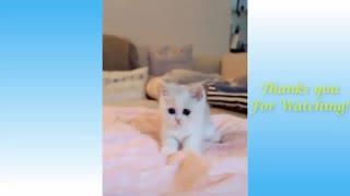 Kitten Stands Up
