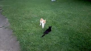 black cat playing with yellow cat