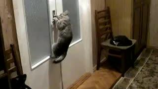 the cat opens the door