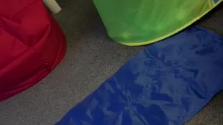 Owner plays in frenchie puppies ball pool