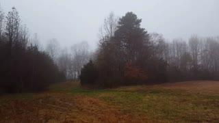 Foggy Field with Owls