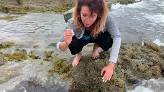 NOT Steve Irwin - Travelin' Tanya and the Sea Anemone
