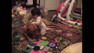 Toddler and Labrador