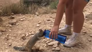 Squirrel drinks from woman's canister at Grand Canyon