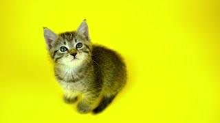 A little cat, love!!!