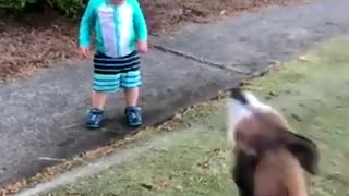 Babies Playing With Dogs