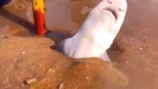 Shark is Struggling